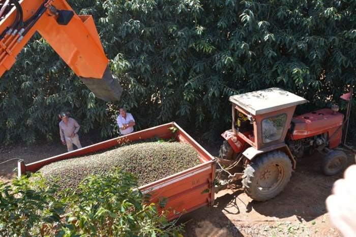 Brazil-Harvest.jpg